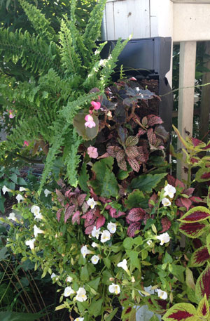 Living Wall Planter from GroVert